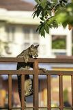 Die braune Katze klettert den Zauneisenrost stockfotos