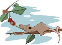 Ratte und eine Kirsche. Karikatur Stockbild