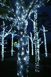 Die Bäume, die mit Girlande verziert werden, beleuchten während der Grußjahreszeit Stockfoto