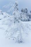 Die Bäume, die mit Schnee auf einem Berg bedeckt werden, übersteigen Stockbild