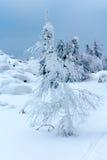 Die Bäume, die mit Schnee auf einem Berg bedeckt werden, übersteigen Lizenzfreie Stockfotografie