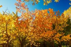 Die bunte Baumlandschaft des Herbstes Stockfotos