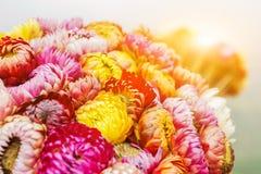 Die bunte Blume Stockbild