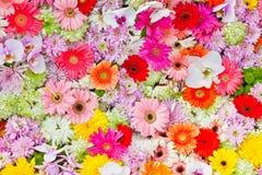 Die bunten Blumen Stockfotos