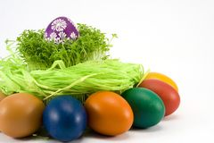 Die bunten Eier mit Kresse lizenzfreies stockbild