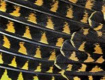 Die bunten Federn einer Vogelnahaufnahme Lizenzfreie Stockfotografie