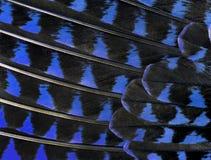 Die bunten Federn einer Vogelnahaufnahme Stockfoto
