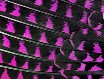 Die bunten Federn einer Vogelnahaufnahme Stockfotos