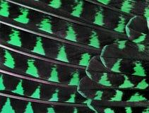 Die bunten Federn einer Vogelnahaufnahme Lizenzfreie Stockbilder