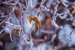 Die Buschniederlassungen umfasst durch den Schnee Lizenzfreies Stockbild