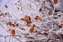 Die Buschniederlassungen umfasst durch den Schnee Stockfotografie
