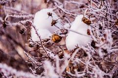 Die Buschniederlassungen umfasst durch den Schnee Lizenzfreie Stockfotografie