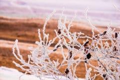 Die Buschniederlassungen umfasst durch den Schnee Lizenzfreies Stockfoto