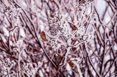 Die Buschniederlassungen umfasst durch den Schnee Lizenzfreie Stockfotos