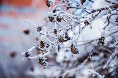 Die Buschniederlassungen umfasst durch den Schnee Stockfoto