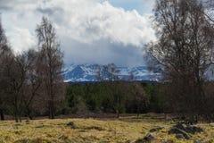 Die Cairngorm-Berge mit Heidemoor und Bäume in der Front Lizenzfreie Stockfotografie