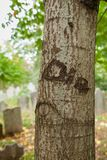 Tree Carving in Cemetery. Die is carved into an old tree in a pre-Revolutionary War cemetery. You can see the tombstones in the background stock images