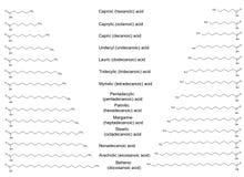 Die chemischen Strukturformeln der bedeutenden gesättigten Fettsäuren Stockfotografie