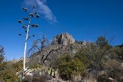Die Chisos Berge in der großen Schlaufe Stockfotos