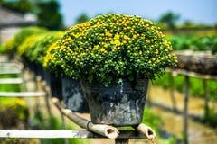 Die Chrysanthemenblumen Stockbild