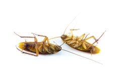Die cockroach royalty free stock images