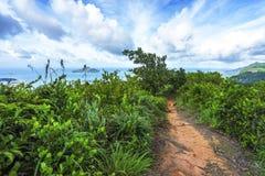 Die copolia Spur wandernd, schaukelt Granit in den Dschungel auf mahé, s stockbild