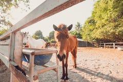 Die dünnen Pferde im Zaun- und Sonnenlicht lizenzfreie stockbilder