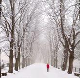 Die Dame, die in einen Schnee geht, deckte Prachtstraße ab Lizenzfreies Stockfoto