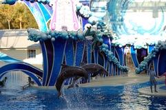 Die Delphine springend mit Kursleiter Stockfotos