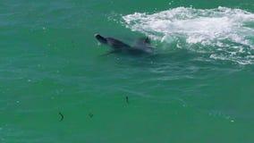 Die Delphinherstellung spritzt stock footage