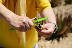 Die Demonstration von Aloe-Vera-Anlage für Touristen lizenzfreie stockfotografie