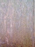 Die Details des Oberflächen- und alten Holzes im Hintergrund Stockbild