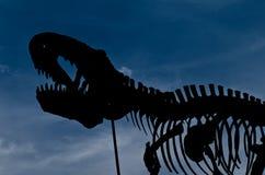 Die Dinosaurier-Knochen Stockfoto
