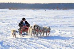 Die dogsled Eilen auf Schnee Lizenzfreies Stockfoto
