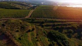 Die Donau und Reihen des Weinbergs bevor dem Ernten Stockbilder