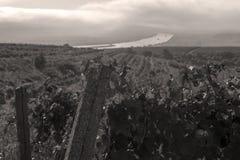 Die Donau und Reihen des Weinbergs bevor dem Ernten Lizenzfreie Stockfotos