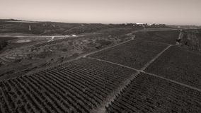 Die Donau und Reihen des Weinbergs bevor dem Ernten Lizenzfreies Stockbild