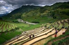 Die Dorfbewohner, die in den Reisterrassen arbeiten, nähern sich Sapa Lizenzfreie Stockbilder
