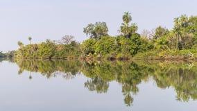 Die Dschungel und der Fluss lizenzfreie stockfotografie