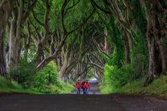 Die dunkle Hecke, Nordirland stockfoto