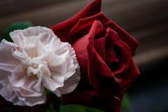 Die dunkle Rose und die weiche Gartennelke lizenzfreies stockbild