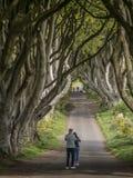 Die dunklen Hecken - ein berühmter Standort in Nordirland - STRANOCUM, VEREINIGTES KÖNIGREICH - 12. MAI 2019 lizenzfreie stockbilder