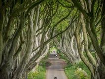 Die dunklen Hecken - ein berühmter Standort in Nordirland - STRANOCUM, VEREINIGTES KÖNIGREICH - 12. MAI 2019 stockfotografie