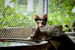 Die durstige Katze lizenzfreies stockfoto