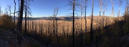 Die Ebenen durch die Bäume Stockfotografie