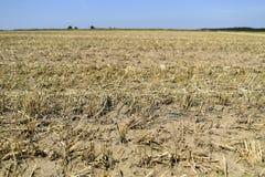 Die Effekte der Dürre, getrocknetes Feld im Sommer lizenzfreies stockfoto