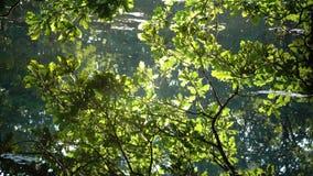Die Eichenniederlassungen, die mit dem hellen Sonnenlicht verbogen wird auf Wasser beleuchtet werden und werden im See reflektier stock video