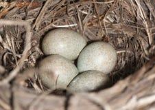 Die Eier Lizenzfreies Stockbild