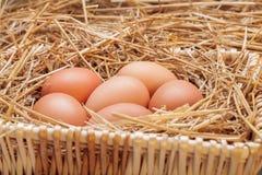Die Eier gelegt mit Heu Lizenzfreie Stockfotografie