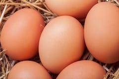 Die Eier gelegt mit Heu Stockfotografie